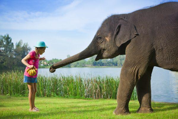 Отдохнуть с детьми в Таиланде